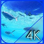 Aquarium Screen Live Wallpaper 1.0