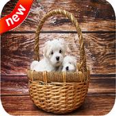 Cute Puppies Live Wallpaper 4k 3
