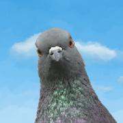 Pigeon Attack 1.2.1