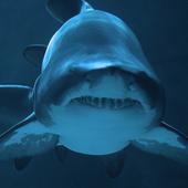 Shark Live Wallpaper 1.1