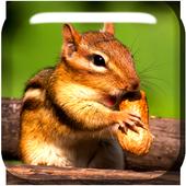 Chipmunk Live Wallpaper 1.0