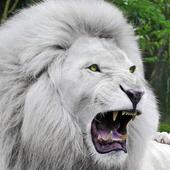 White Lion Wallpaper 2.6