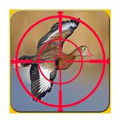 صيد الطيور 1.1