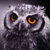 Owl Pack 2 Wallpaper Animals 1.30