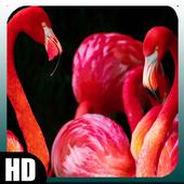 Flamingo Wallpaper 1.4