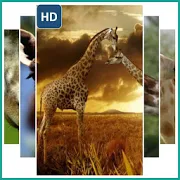 Giraffe Animal Wallpaper 1.0