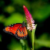 Fantastic Nature Images 3.1