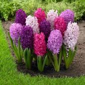 Good Morning Flowers 3.1