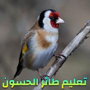 صوت طائر الحسون للتعليم - بدون نت 1.0