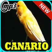Canto Canario Belga Campainha Mp3 1.0