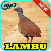 Canto Lambu Brasilieiro Completo 1.0