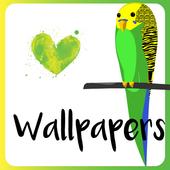 I Love Parakeets Wallpaper App 1.0