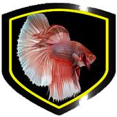 Ornamental Betta Fish 1.0