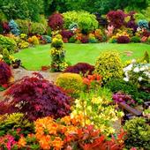Japanese Garden Ideas 5.0