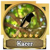 Chirping kacer Top 1.0