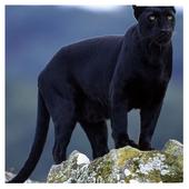 Black Panther Wallpaper 1.1