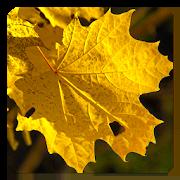 Autumn Live Wallpaper 1.4