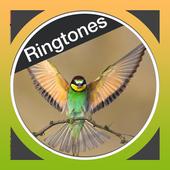Birds Ringtones Free 1.2