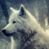 Wolf Live Wallpaper 1.0
