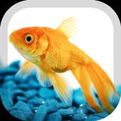 Goldfish Wallpaper 1.5