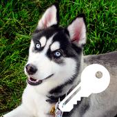 Dear Merry Husky Top Favorite Dogs PIN Smart Lock 1.0