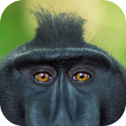 Primate. Animals and Life 1.0