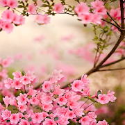 Spring Flowers Live Wallpaper 5.0