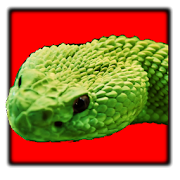 Snake Puzzle HD 1.0