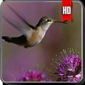 Hummingbird Wallpaper 1.0