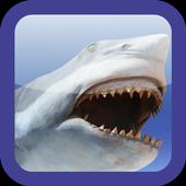 Shark Revenge Attack 1.1
