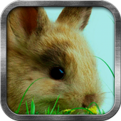 Adorable Bunny Live Wallpaper 1.3