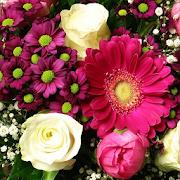 Beautiful Flowers Wallpaper 1.1
