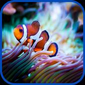 Real Aquarium Fish Images 1.0