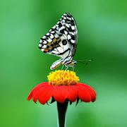 5D Butterflies live wallpaper 1.0.1