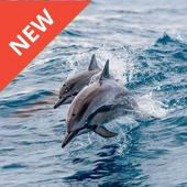 Dolphin Wallpaper Hd 11 Apk Download Android