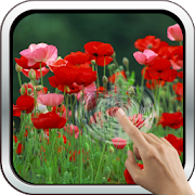 Red Poppies 3D Wallpaper 10.0