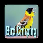 Eurasian Blue Tit Bird Sounds 1 0 APK Download - Android