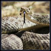 Rattlesnake Sounds - Cascavel 1.0