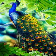 Peacock Beauty Live Wallpaper 3