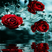 Red Roses Reflection LWP 3