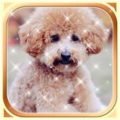 Puppy Dog Wallpaper HD 1.0