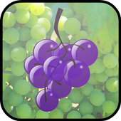 Vineyard Grape Grabbers 1