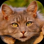 Cat Care Course 1.0