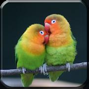 Master Kicau Lovebird 1.5