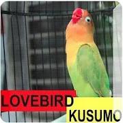 Loverbird Kusumo 1.1