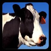 Cow Sounds 1.0