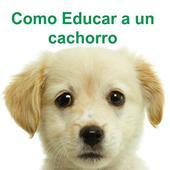 Como educar a un cachorro 1.5