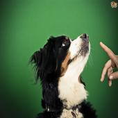 Dog training 1.1.2