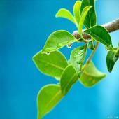 Plant Identification 1.5