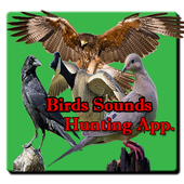 Bird Hunting All Birds Sounds/Calls In One App. 1.0.1